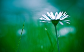 White Flower And Green Grass