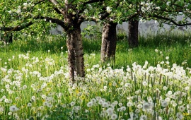 White Flower Garden And Trees