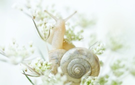 White Snail Animal