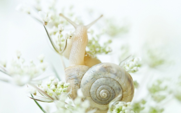 White Snail Animal (click to view)