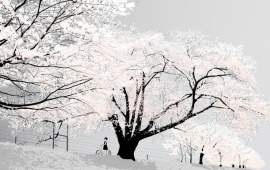 White Snowy Trees