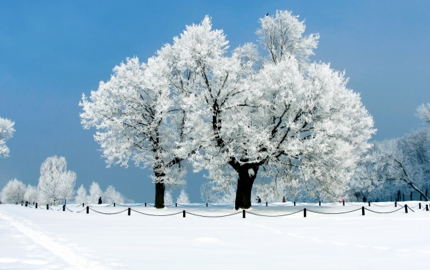 White Trees Winter (click to view)