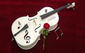 White Violin And Rose Flower