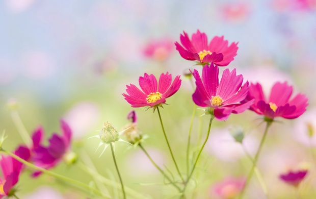 Wild Fresh Flowers (click to view)