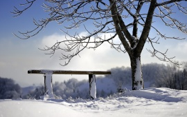 Winter Bench And Tree