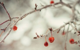 Winter Berries Branch