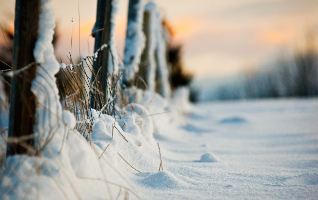 Winter Evening Snow Fence (click to view)