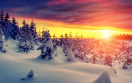 Winter Forest Sunset Sky Snow