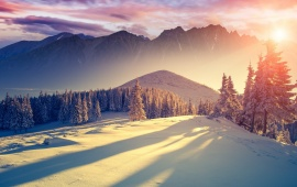 Winter Freshness Landscapes