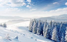 Winter Hills And Forest