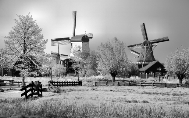 Winter In Holland (click to view)