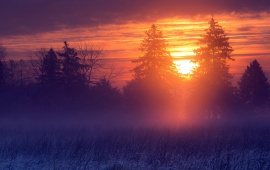 Winter Misty Sunset Landscape