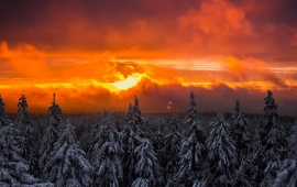 Winter Orange Sunset Forest Snow