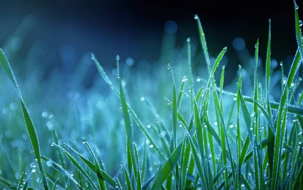 Winter Season Grass On Water Drops (click to view)