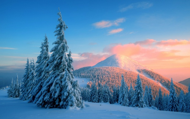 Winter Snow Trees (click to view)