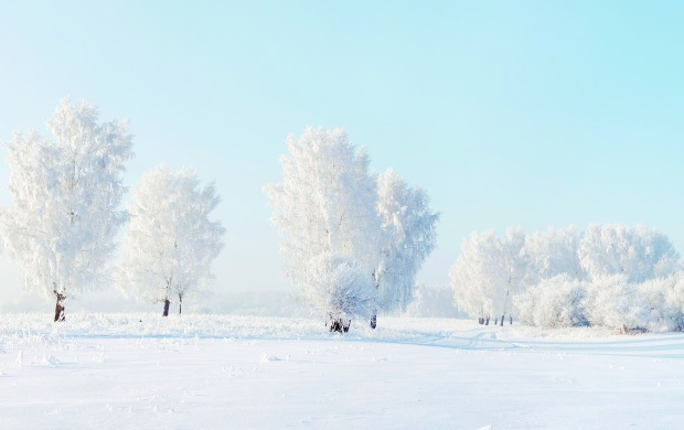 Winter Snow Trees Frost (click to view)