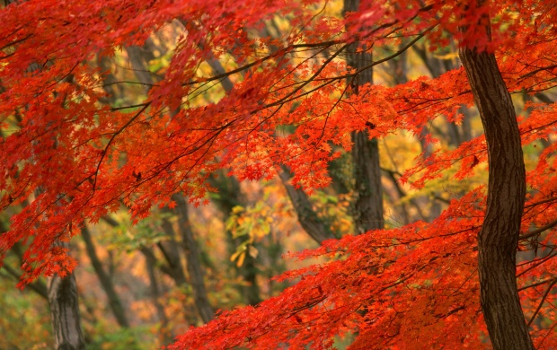 Wonderful Autumn (click to view)