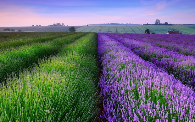 Wonderful Summer Hills (click to view)