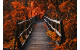 Wood Bridge in Orange Forest
