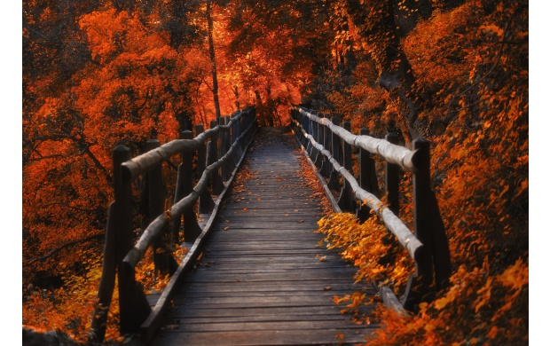 Wood Bridge in Orange Forest (click to view)
