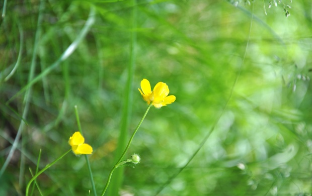 Yellow Flower Plant And Grass (click to view)