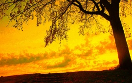 Yellow Sky And Autumn Tree