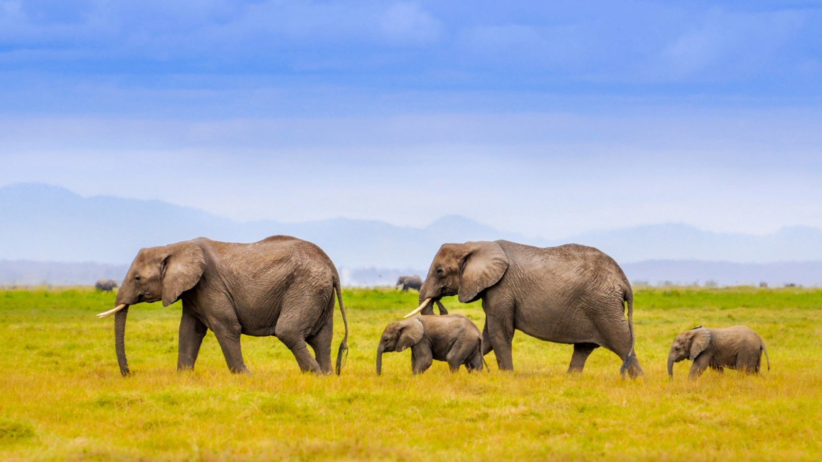 African Elephants Family Landscape