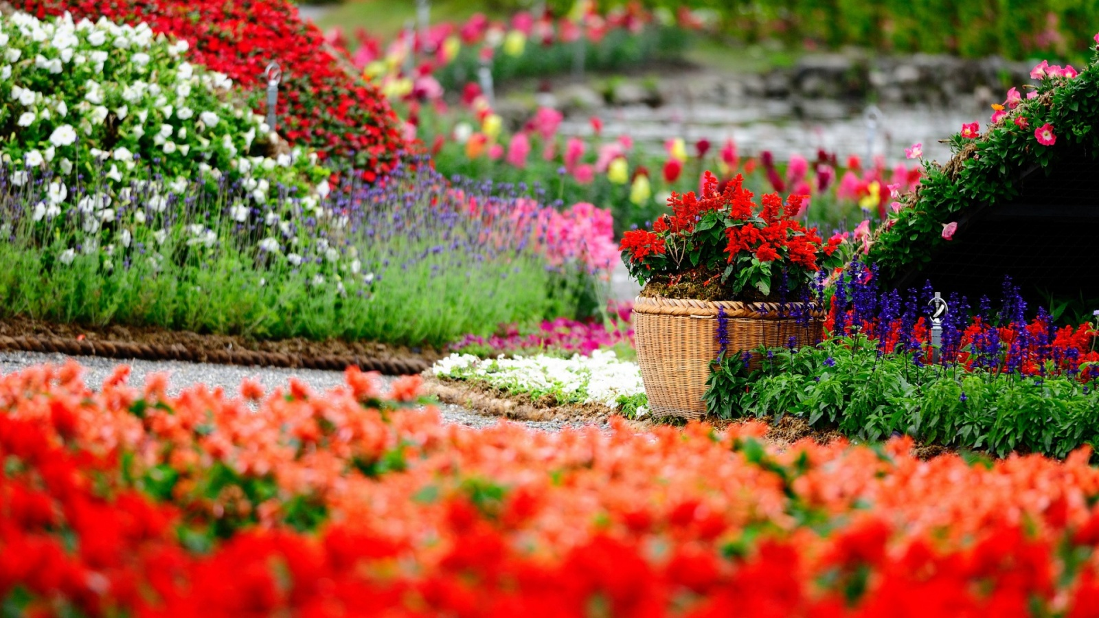 Amazing flower garden wallpapers 1600x900 557108 for Amazing flower gardens