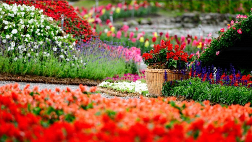 Amazing Flower Garden Wallpapers