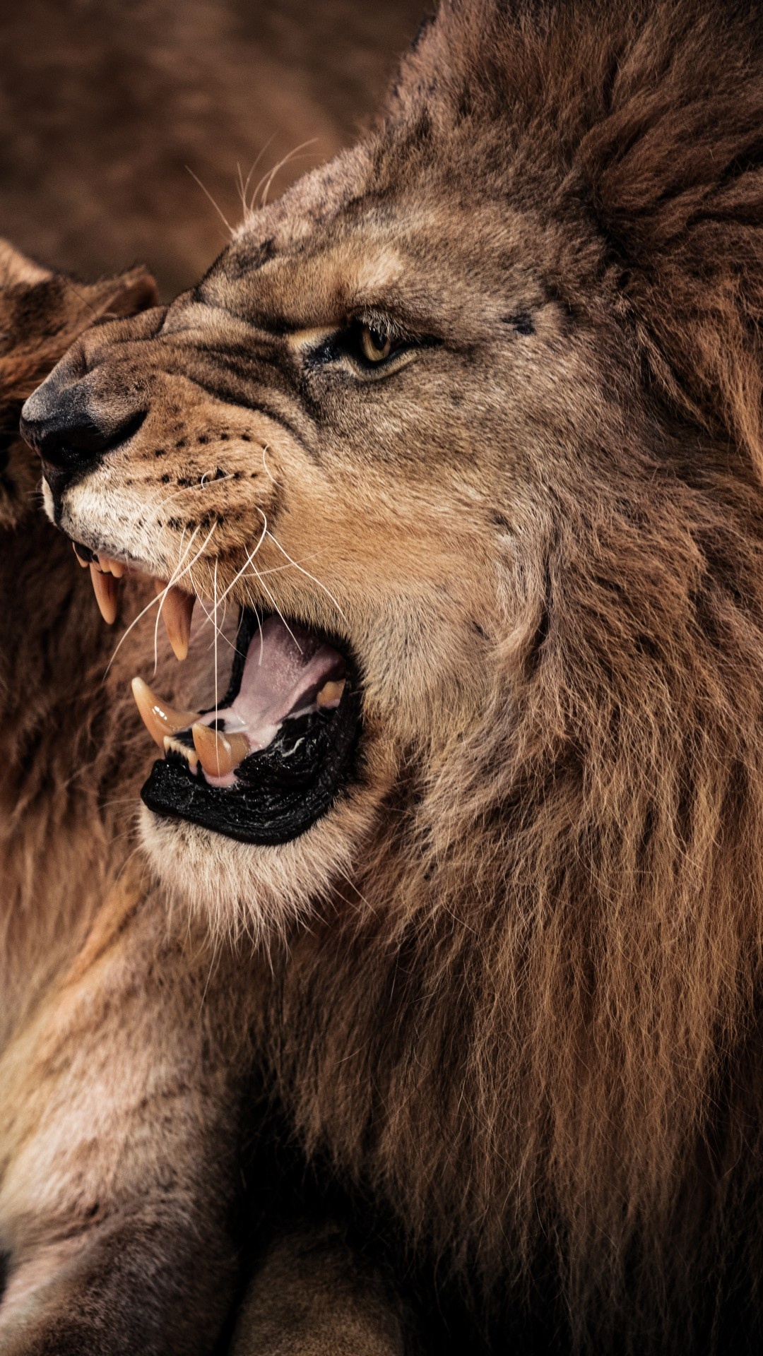 Angry Lion Growing Wallpapers - 1080x1920 - 875339