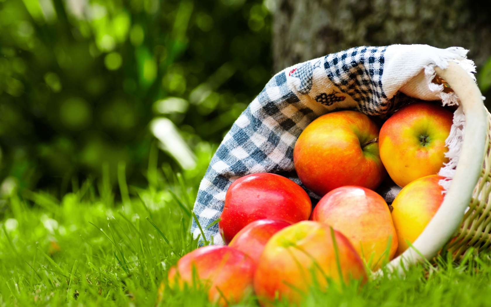 Apples Basket On Grass