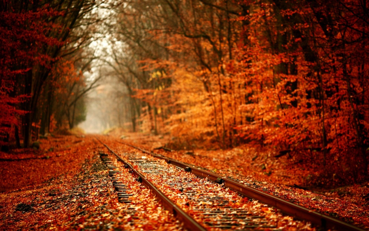 Autumn Forest And Railroad