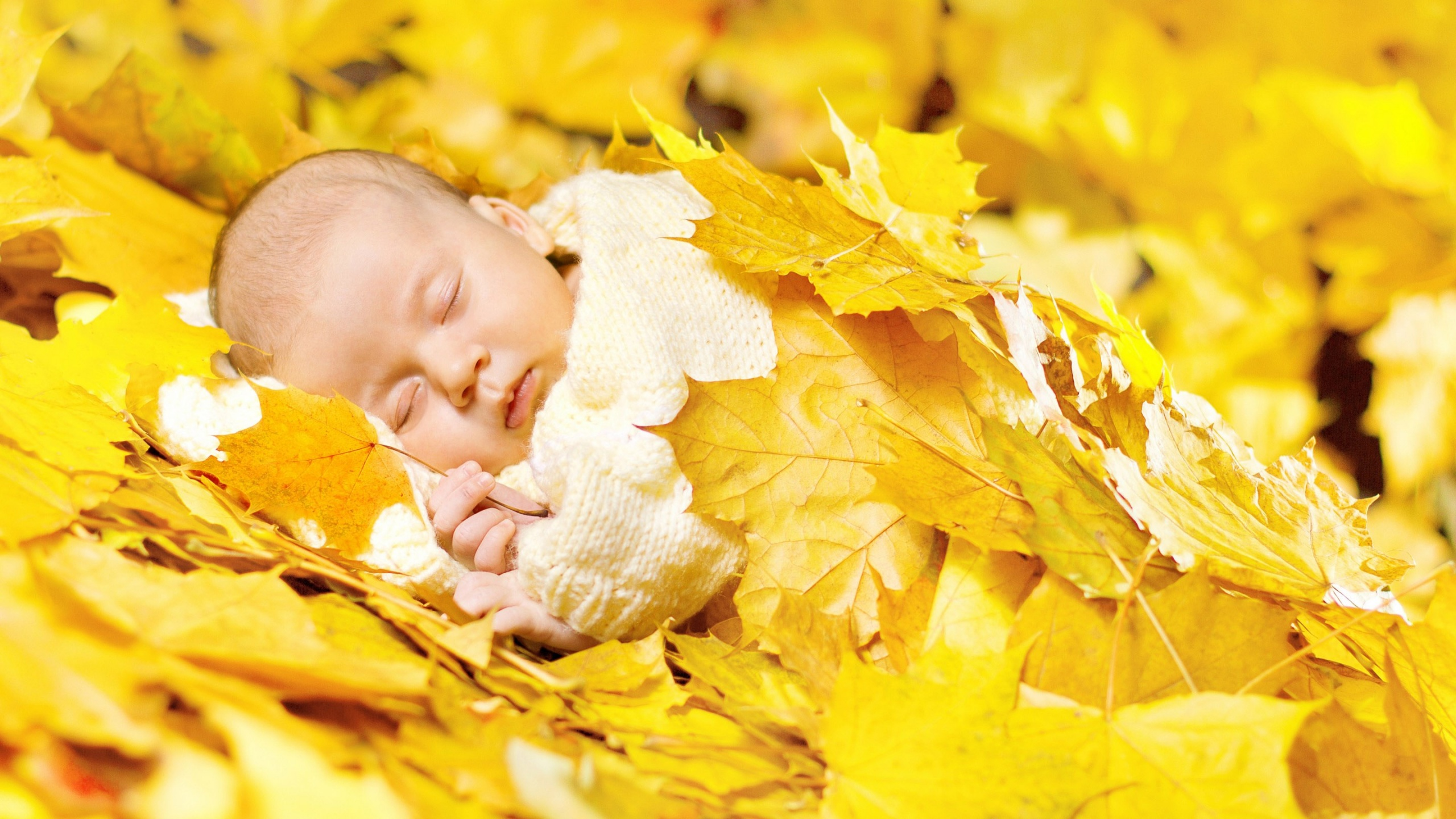 Autumn Leaves In Baby