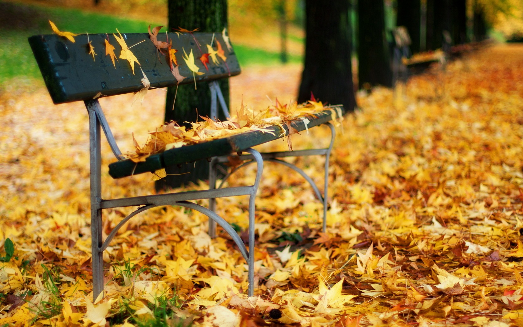 autumn leaves on bench - photo #9