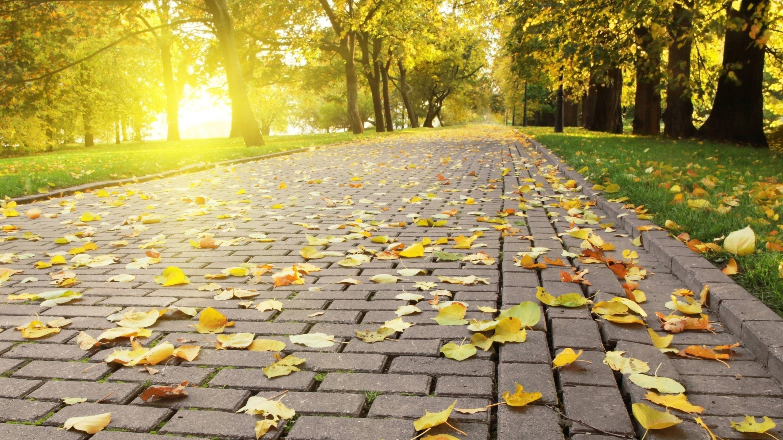 Autumn Leaves On The Pavement