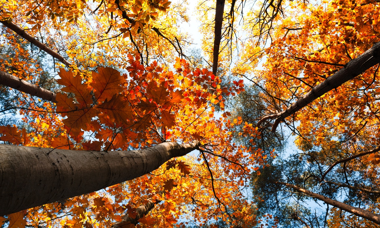 Autumn Trees Leaves