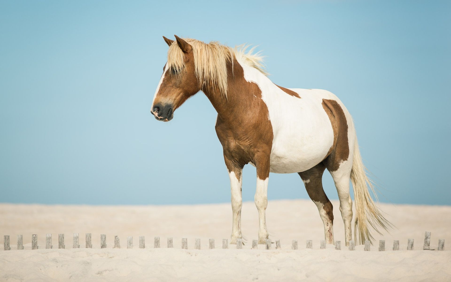 Beautiful Horse On Sand