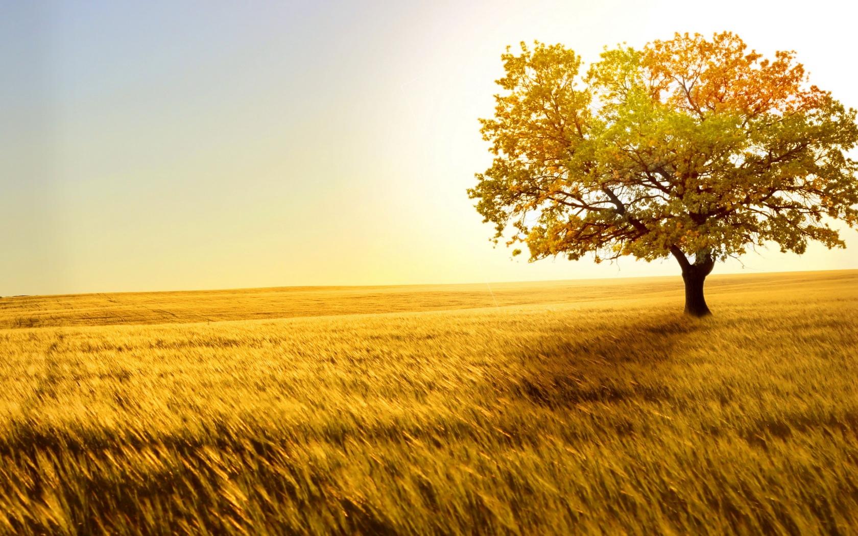 Beautiful nature 1680 x 1050 download close