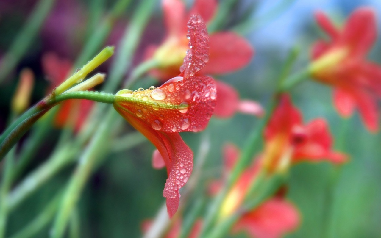 Beautiful Rain Flowers
