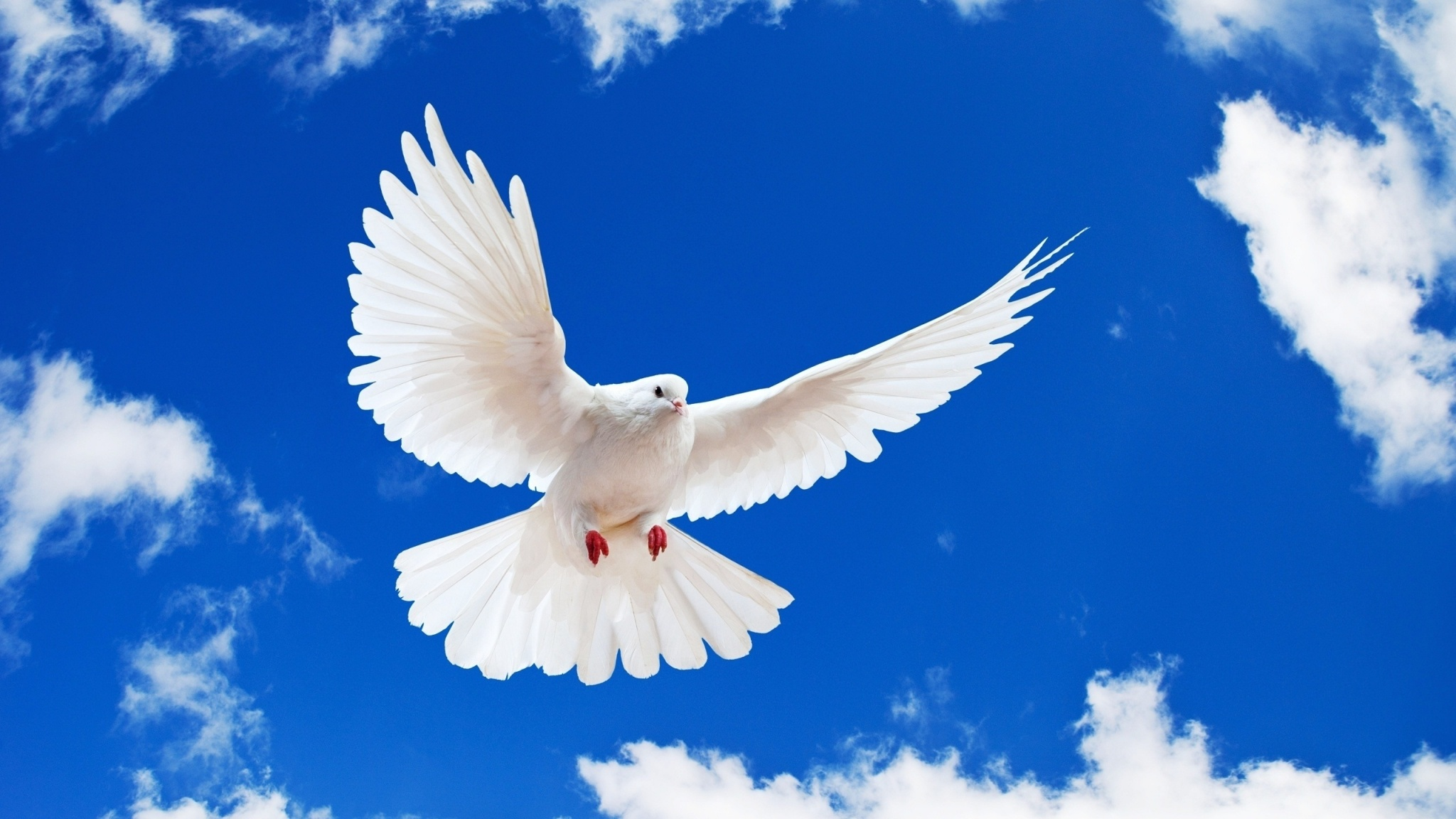 beautiful white dove wallpapers 2048x1152 508680
