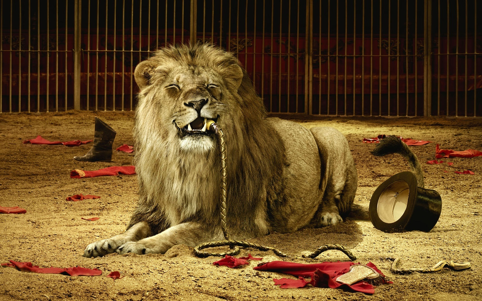 Big Lion With Rope Wallpapers And Pictures