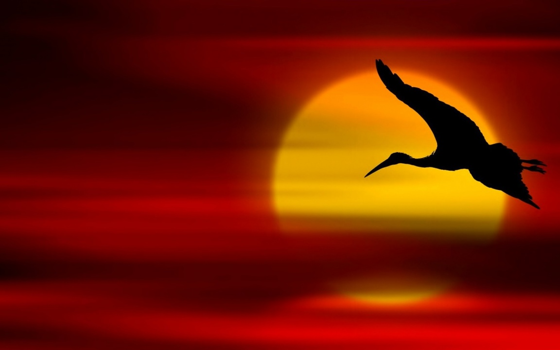 Bird Sunset Flying
