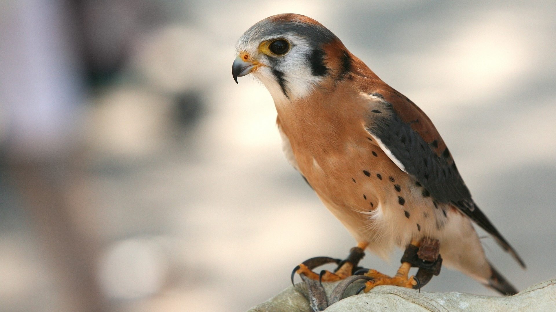 Common birds of prey of tennessee