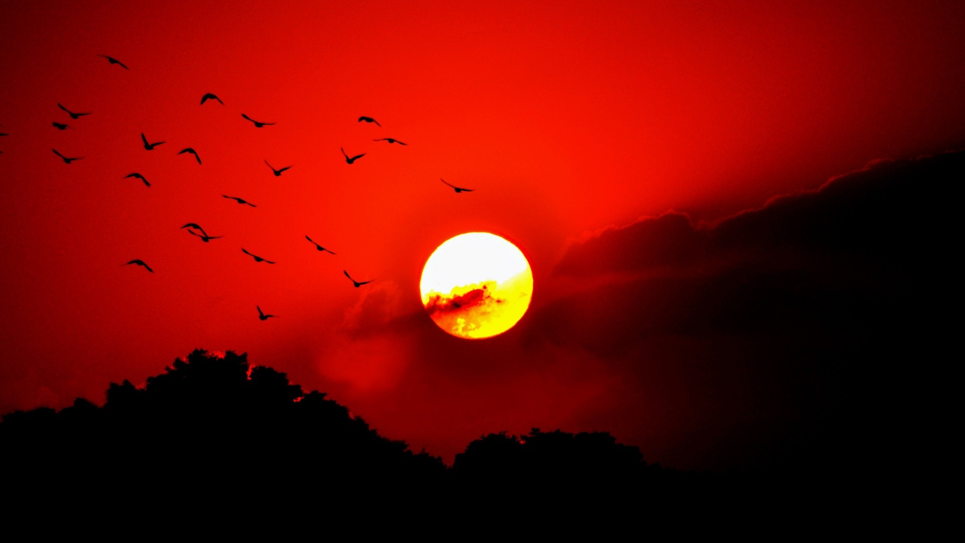 Birds red sunset sky flying wallpapers 1920x1080 204097 - Wallpaper pictures ...