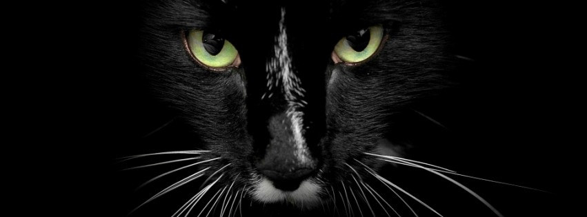 Black Cat With Green Eyes Wallpapers Wallpaper Desktop Hd