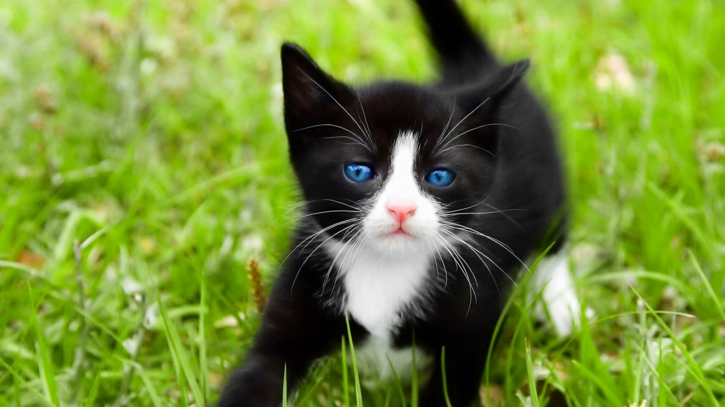Black Kitten Playing in the Grass