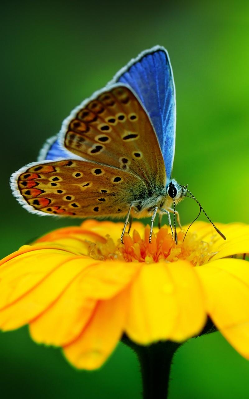 1280 x 800 butterfly wallpaper - photo #13