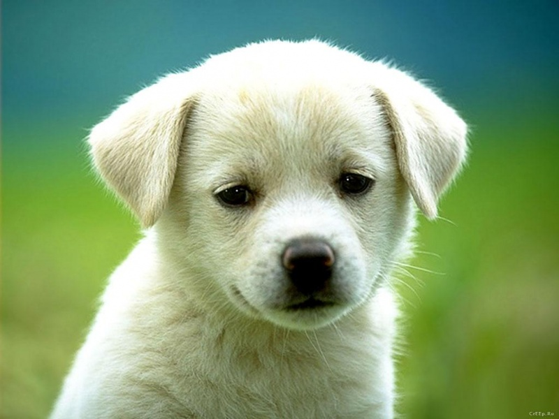 Cute and Innocent Dog