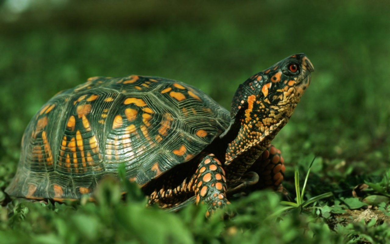Cute Green Turtle Wallpapers - 1280x800 - 257809