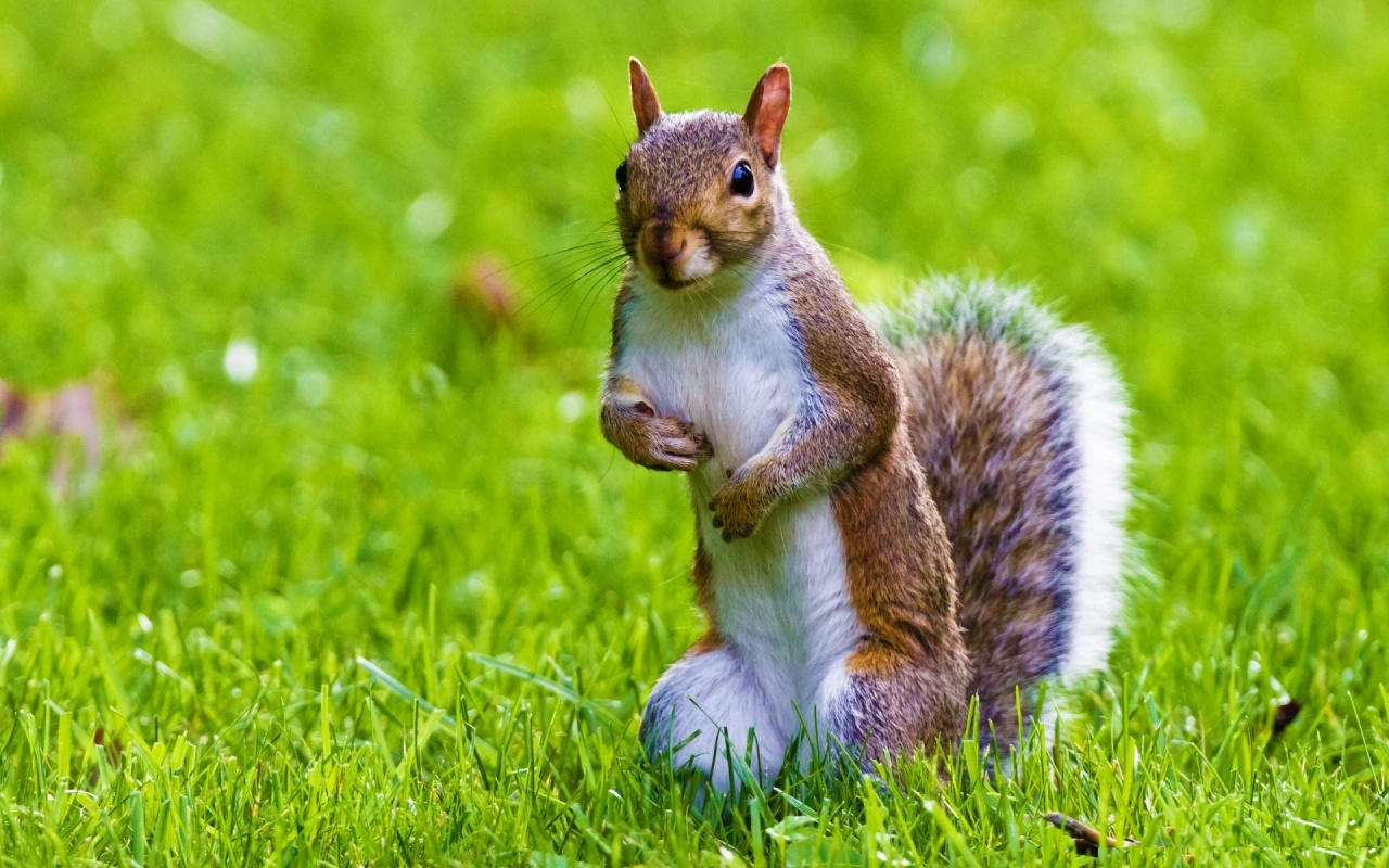 Cute Squirrel Wallpapers - 1280x800 - 361296